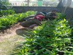 program-penumbuhan-wirausaha-muda-pertanian.jpg
