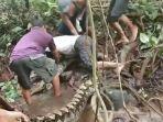 sebanyak-6-warga-sempa-tberjibaku-melepaskan-belitan-ular-piton-ini-dari-kaki-seorang-nelayan.jpg
