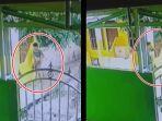 seorang-pria-tertangkap-kamera-mencuri-sandal-di-dekat-masjid-di-babat-toman-banyuasin.jpg
