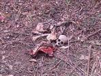 tulang-belulang-manusia-di-ogan-ilir_20150915_173444.jpg