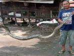 ular-piton-28-meter-di-kayuagung-oki11.jpg