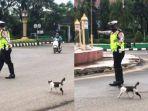 viral-video-polisi-bantu-kucing-menyeberang-jalan-raya.jpg