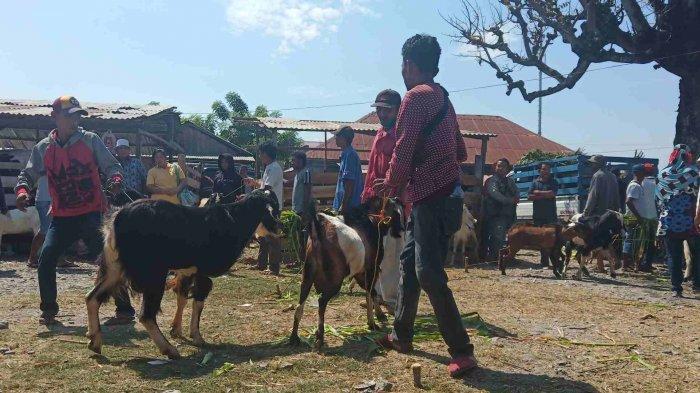 aktivitas-jual-beli-hewan-ternak-kambing-33.jpg