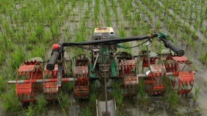 Petani di Morowali Ini Rakit Alat Penyiangan Gulma, Garap Sawah jadi Lebih Mudah