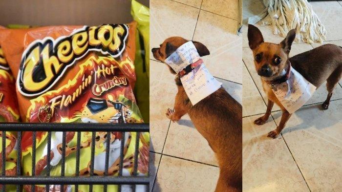 Jalani Karantina Diri, Pria di Meksiko Ini Kirim Anjingnya untuk Berbelanja Snack Kesukaannya