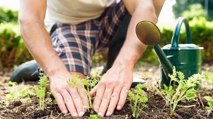 5 Manfaat Berkebun Skala Rumahan, Bisa Bantu Jaga Kesehatan Fisik hingga Mental