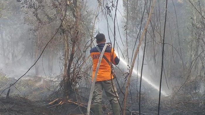 Kebakaran Hutan dan Lahan 2019, Apa Saja Komentar Para Pejabat dan Tokoh Politik?