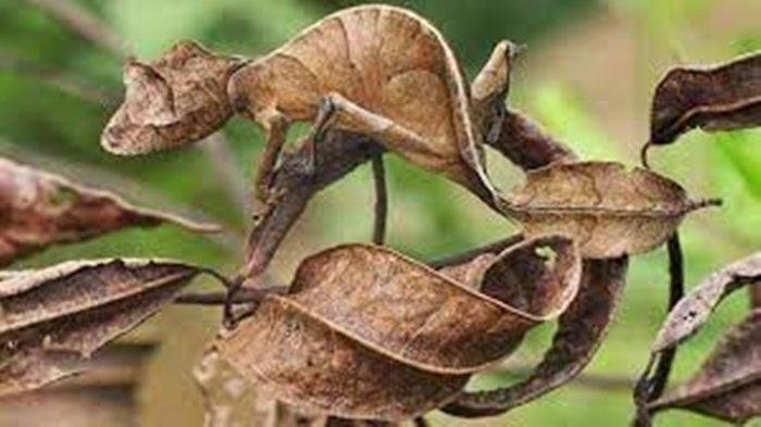Apa Itu Kamuflase dan Mimikri? Istilah Pertahanan Diri Binatang di Sekitar Kita