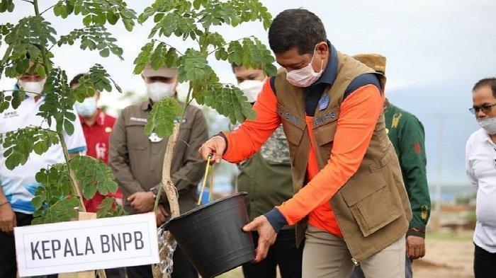 Hijaukan Kawasan Huntap di Sigi, Kepala BNPB Tanam Pohon Trembesi