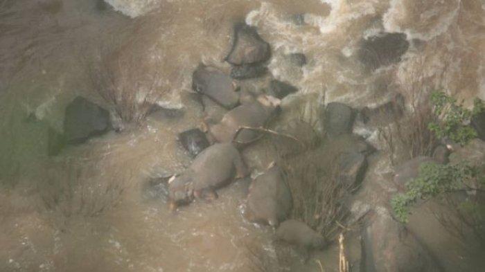 Selamatkan Anggota Kawanan, 6 Gajah Liar di Thailand Mati Terjatuh di Air Terjun