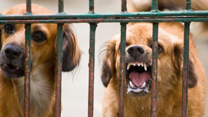 Mulai 1 Mei 2020, China Larang Warganya Konsumsi Daging Anjing dan Kucing