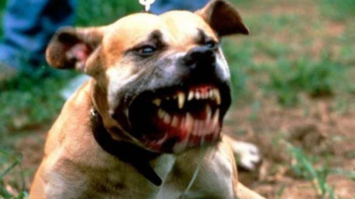 Hendak Tolong Tetangga dari Serangan Anjing, Seorang Pria Tidak Sengaja Membunuhnya dengan Panah