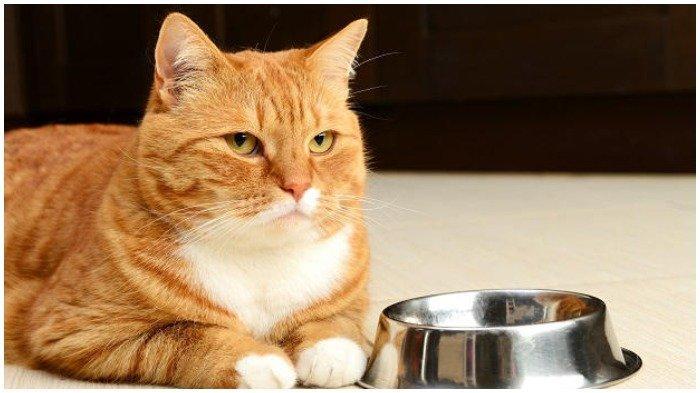 Sempat Dilakukan Pemeriksaan Hidung dan Dubur, Kucing Peliharaan di Hong Kong Positif Corona