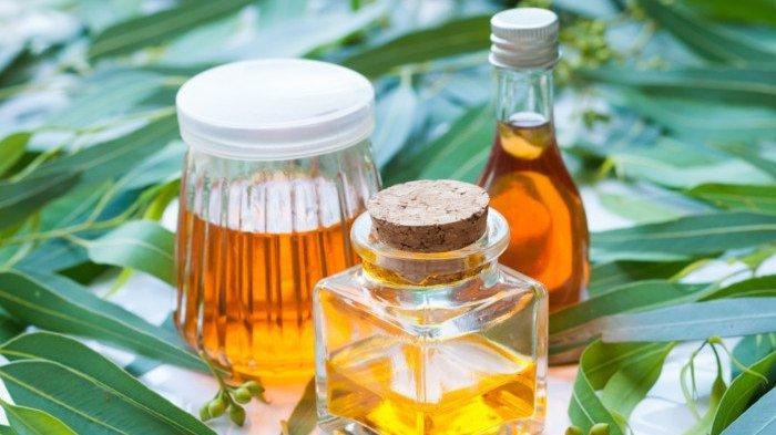 Digunakan Kementan sebagai Antivirus Corona, Ini 7 Manfaat Lain Eucalyptus untuk Kesehatan