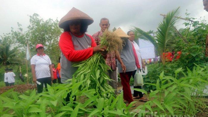 Bupati Tolitoli Sebut Program READSI dari Kementan Mampu Gerakkan Ekonomi Wilayah