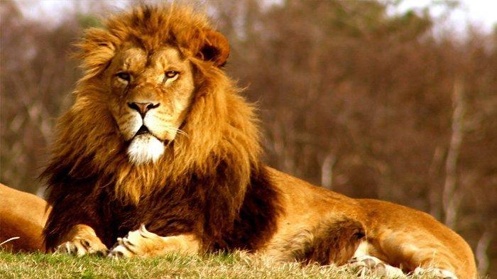 Berniat Cari Cula Badak, Seorang Pemburu Gelap Malah Tewas Diinjak Gajah dan Dimakan Singa