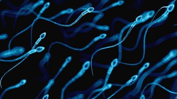 Sehat atau Tidak Mengeluarkan Sperma Setiap Hari? Ini Penjelasannya