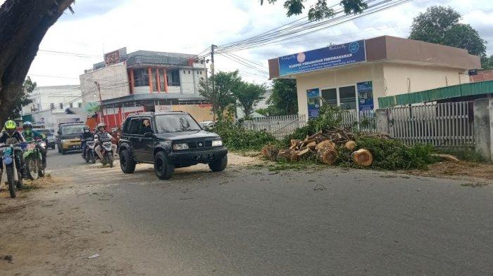 4 Jam Pohon Tumbang Tutup Jalan, Lalulintas Kembali Normal di Jl Veteran Kota Palu