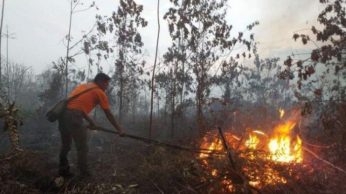 Peneliti Harvard-Columbia Sebut Asap Kebakaran Hutan dan Gambut Percepat Kematian Dini di Indonesia