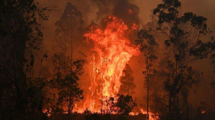 Hal-hal Seputar Kebakaran Semak di Australia, 3 Orang Tewas, Ratusan Koala Diperkirakan Mati