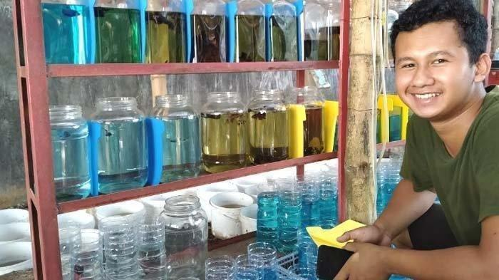 Kisah Verdiansyah Sukses Bisnis Ikan Cupang, Awalnya Modal Rp 500 Ribu Tapi Kini Omset Puluhan Juta