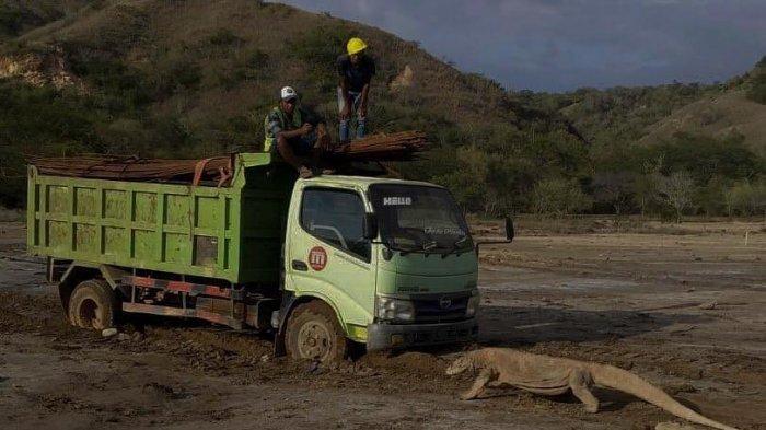 Foto Komodo Hadang Truk Viral di Media Sosial, Bagaimana Penjelasan KLHK?
