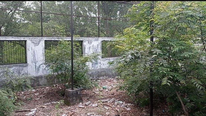 Kondisi Taman Hutan Raya di Desa Ngatabaru, Kecamatan Sigi Biromaru, Kabupaten Sigi, Jumat (16/4/2021).
