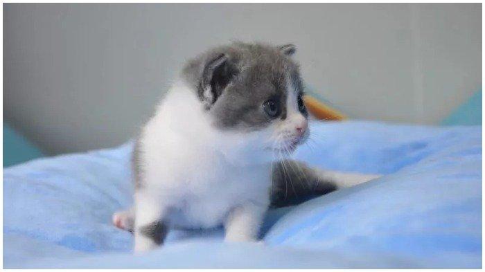 Rela Habiskan Rp 495 Miliar, Pria di China Ini Kloningkan Kucing Kesayangannya yang Meninggal Dunia