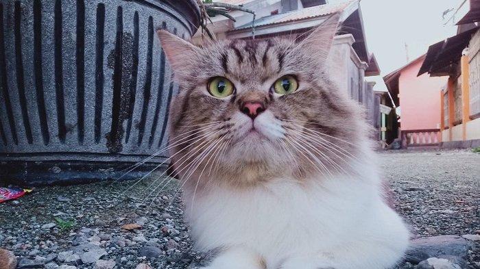 Tekanan Psikologis pada Kucing Bisa Sebabkan Tak Mau Makan, Simak Alasan dan Cara Mengatasinya