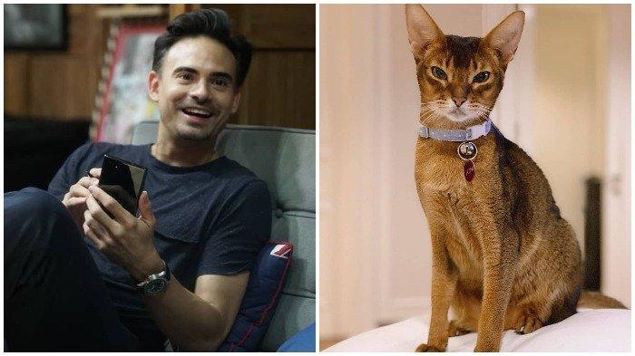 Kucing Kesayangan Ashraf Sinclair Meninggal Dunia, BCL: ''Titip Salam untuk Daddy di Sana''