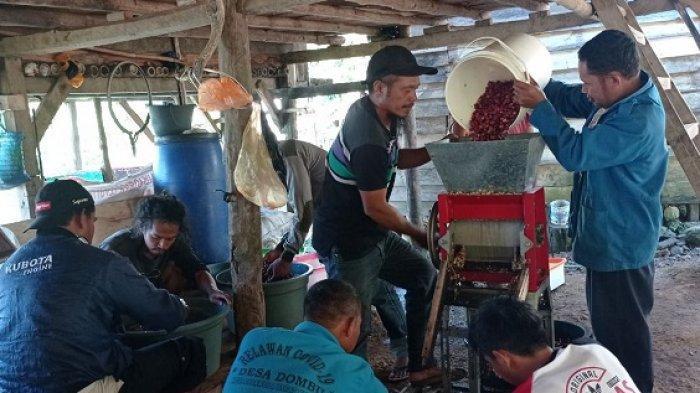 Kelompok KUPS Lore Utara Ikut Kelas Belajar Bersama Petani kopi di Sigi