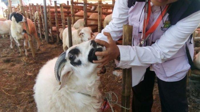 Tata Cara dan Niat Penyembelihan Hewan Kurban Iduladha, Lengkap dengan Syaratnya