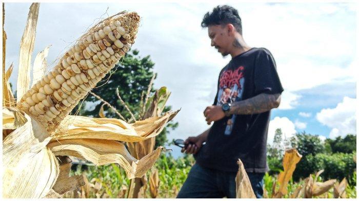 Melihat Aktivitas Warga Binaan Rutan Palu Belajar Bertani
