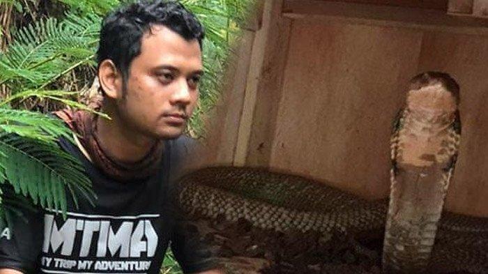 Video Detik-detik Panji Petualang Lepaskan King Kobra 'Garaga', Harus Terjun Langsung ke Sungai