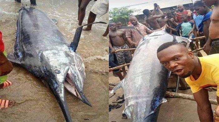 Bagikan Ikan ke Satu Desa Karena Tak Bisa Habiskan Sendiri, Nelayan Kaget Tahu Harganya Rp 37 Miliar