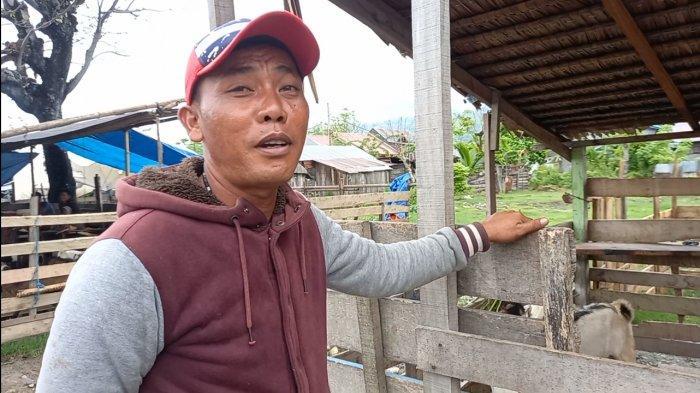 H-4 Jelang Iduladha 2021 Pembeli Kambing Qurban di Pasar Hewan Palu Masih Sunyi