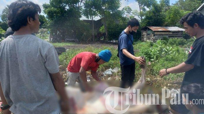 Pemuda GANOGO Berkurban Tiga Sapi, bantu keluarga pasien terdampak Covid-19 di Kelurahan Nunu