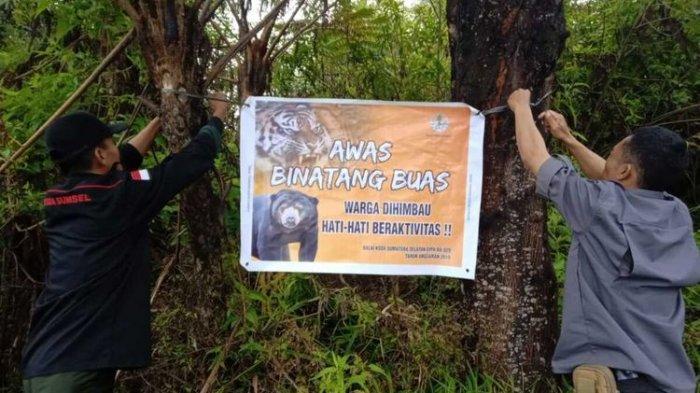 Korban Serangan Harimau di Sumsel kian Bertambah, 4 Orang Ditemukan Tewas
