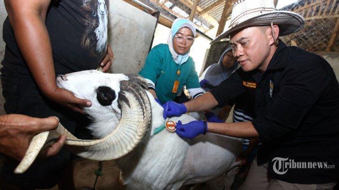Aturan Penyembelihan Hewan Kurban saat Pandemi Covid-19, Panitia Wajib Kenakan Sarung Tangan
