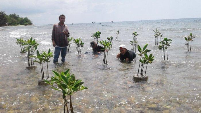 LPAP El Capitan Indonesia Tawarkan Teknik Rekayasa Mangrove di Sepanjang Teluk Palu