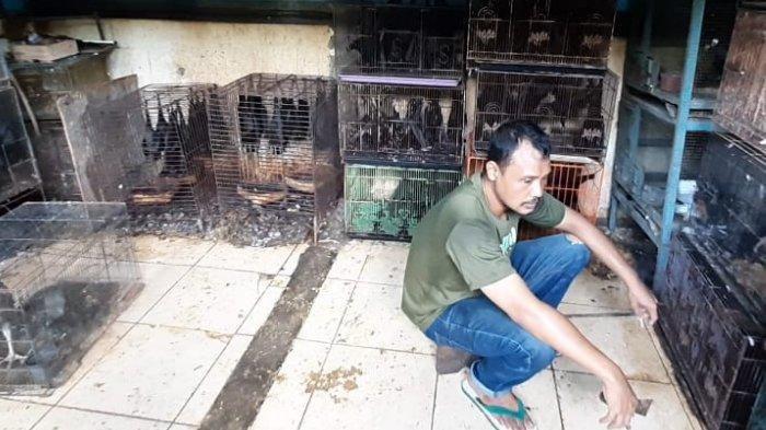 Meski Virus Corona sedang Viral, Warga Solo, Jawa Tengah Masih Tak Takut Konsumsi Kelelawar