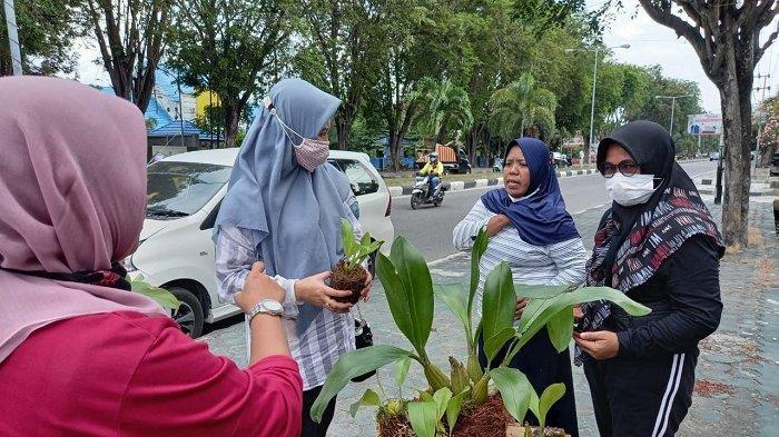 Peringati Hari Lingkungan Hidup Sedunia, BBTNL Bagi-bagi Bibit Pohon Gratis untuk Warga Palu