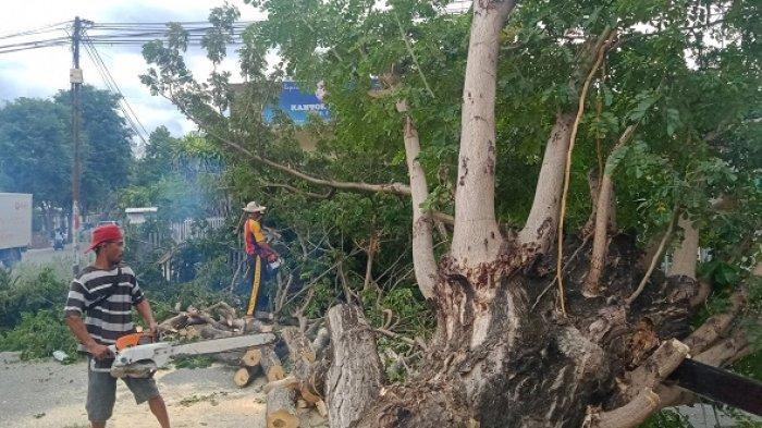 Petugas membersihkan pohon tumbang di Jl Veteran Palu, Minggu (14/2/2021) siang.