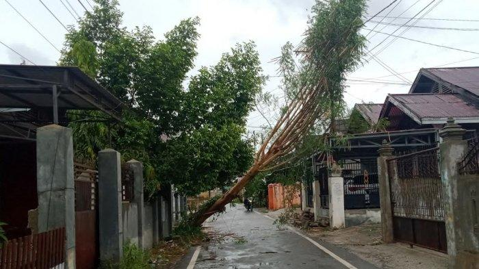 Hujan dan Angin Kencang Terjang Palu, Ada Pohon Tumbang di Lorong Sintuvu