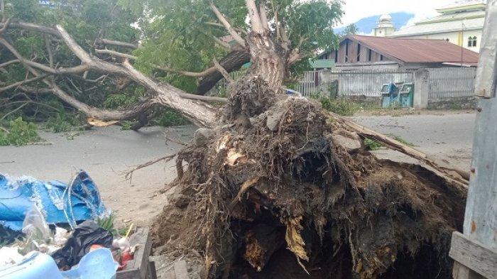 Pohon tumbang di Jl veteran Palu, Minggu (14/2/2021).