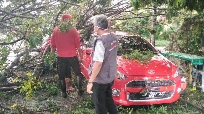 Diterjang Angin Kencang Disertai Hujan, Pohon Tumbang Timpa Mobil Parkir di Palu