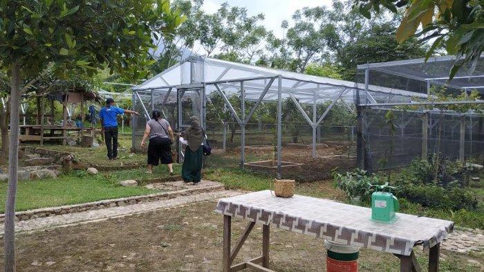 Melirik Prokes di Taman Hutan Kota dan Agrowisata Palu - pua-mbaso-farm-3.jpg