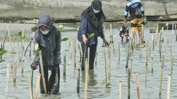 Pasca Bencana Tsunami, Kelompok Pencinta Alam Gencarkan Tanam Mangrove di Teluk Palu