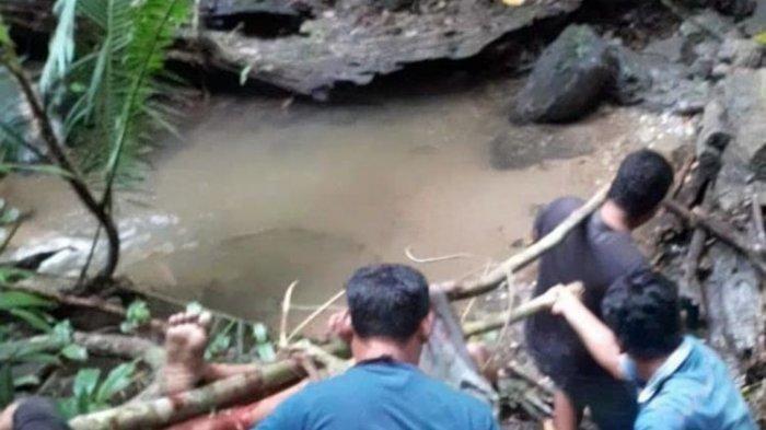 Siswa SMP Tewas Dililit Ular Piton 7 Meter, Evakuasi Berjalan Dramatis, Ular Serang Para Penolong