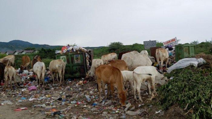 Sampah di Huntap Tondo 1 Belum Diangkut, Aroma Busuk Tercium di Rumah Warga